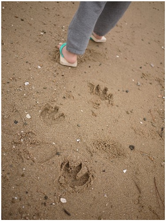 Bear Footprint Shoes For Beach