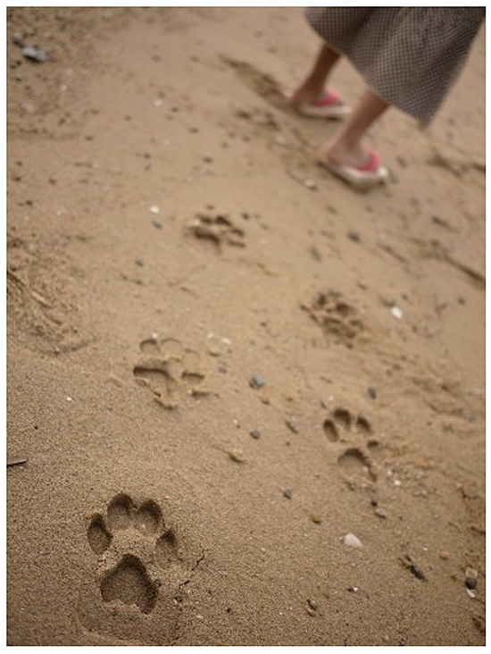 Have Fun Making Pawprints In The Sand