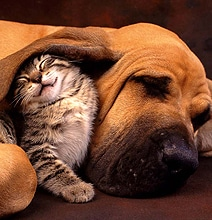 Woof People vs. Meow People: A Personality Analysis