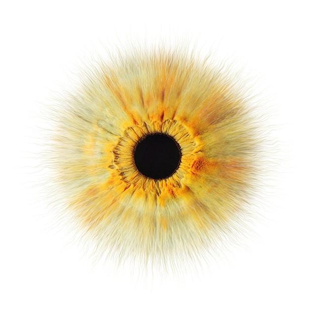 Famous Close Up Eye Photographs