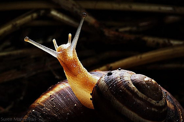 Snails Survive Being Eaten Alive