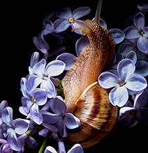 Science: A Shocking Discovery About Snails