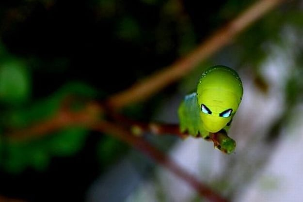10 Insects That Look Like Aliens