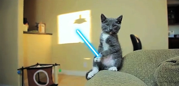 Cats Going Star Wars Jedi