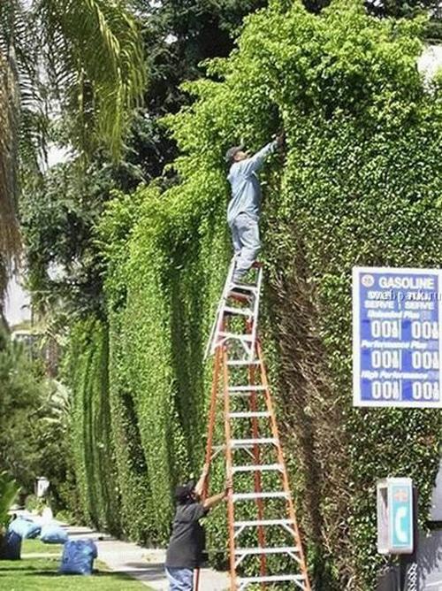 Dangerous Working On Ladder