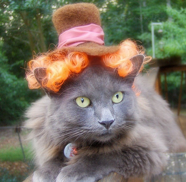 Clothes For Cats Etsy