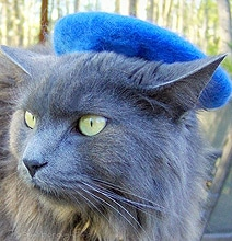 Colorful Cat Hats: Give Your Cute Cat Some Style