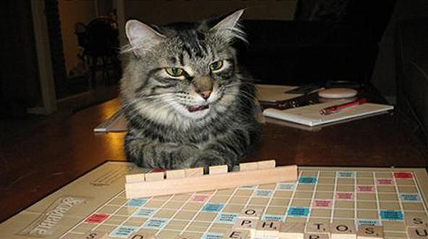 Cats That Play Scrabble [10 Pics]