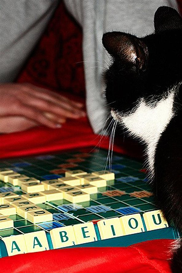 Kittens Play Board Games