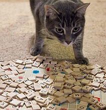 Pictures Of Cats Playing Scrabble