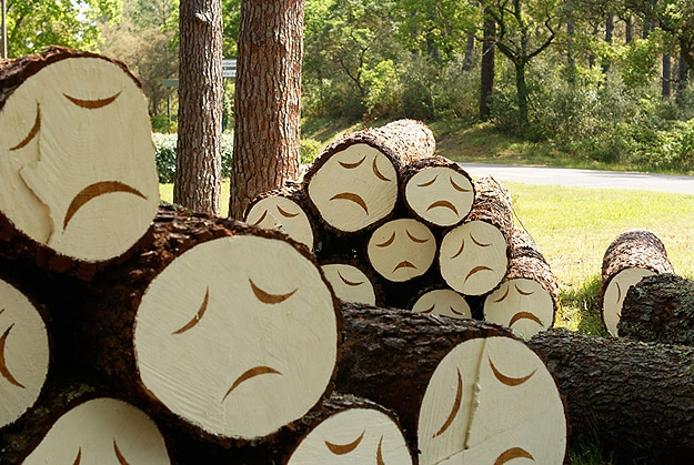 Deforestation Makes Trees Sad