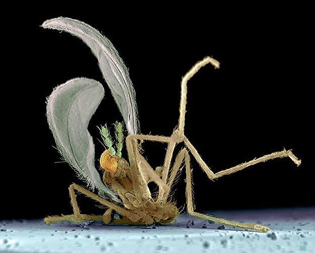 Dead Bugs Killed On Windshields