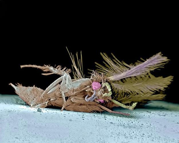 Dead Bugs Killed On Windshield