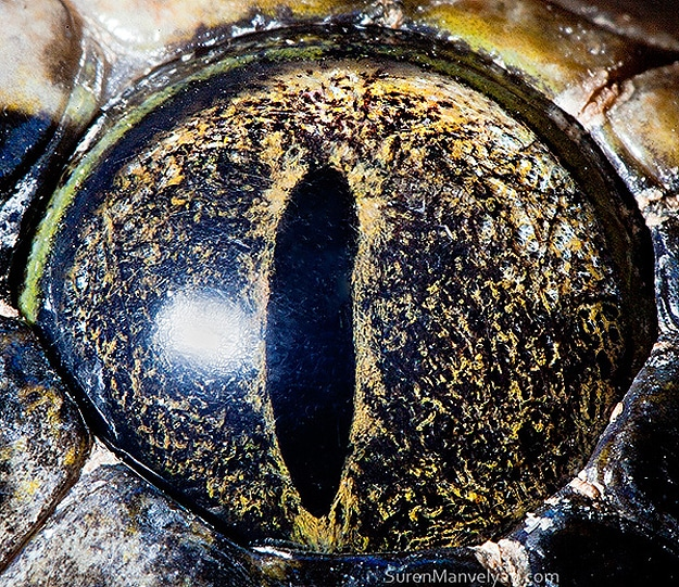 Close Up Animal Eyes