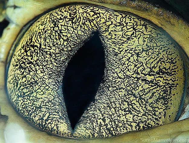 Close Up Of Animal Eyes