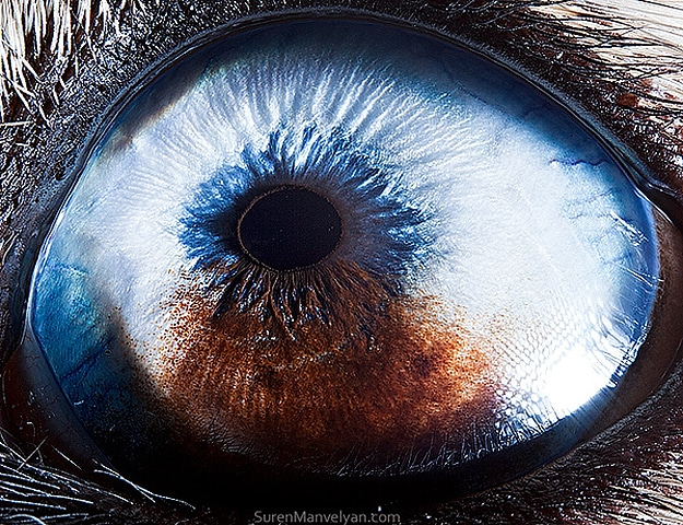 Close Up Shots Animal Eyes