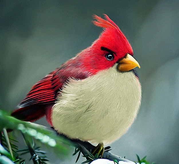 IRL Angry Birds Outside