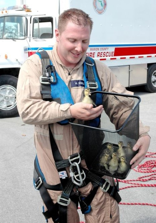 Firemen Rescuing Animals Saving Lives