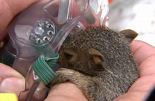 Fireman Rescuing Animals Saving Lives