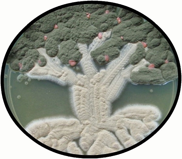 Art Created With Germs: The Beauty Of Bacteria