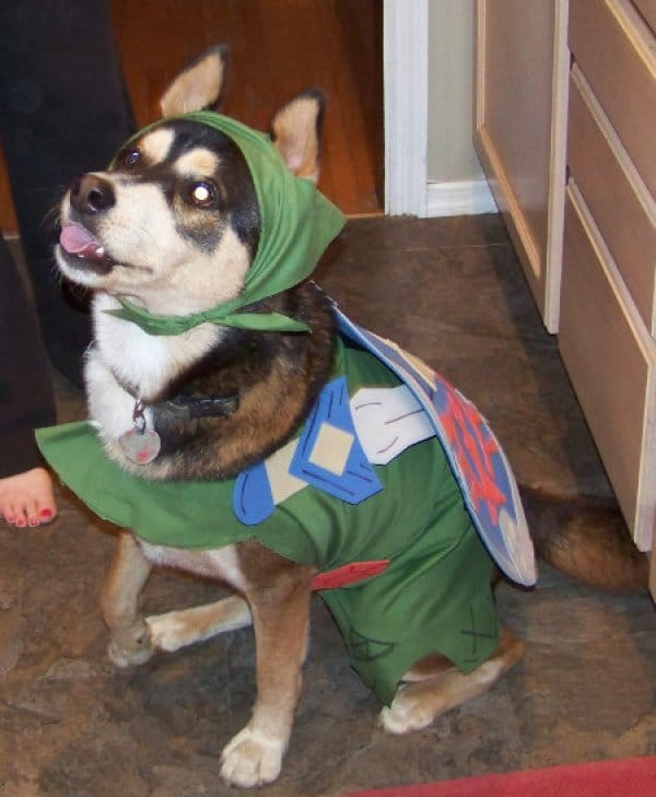 Creative Dog Costumes: When Cosplay Isn't Just For Humans