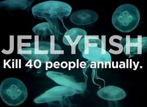 Jellyfish Kill People Every Year