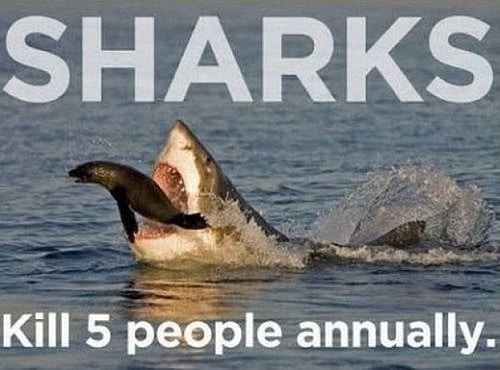 Sharks Kill People Every Year