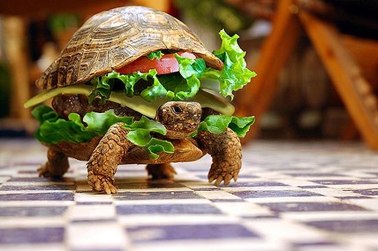 Hamburger and Cheeseburger Creations