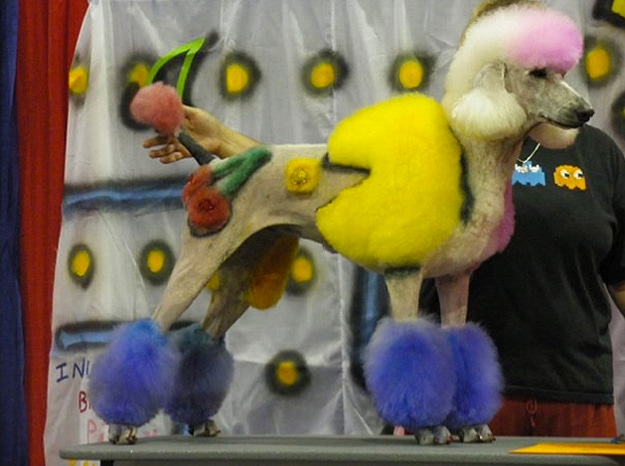 Extreme Dog Grooming Contests