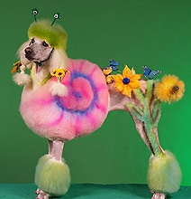 Creative Poodle Art: An Extreme Form Of Dog Grooming