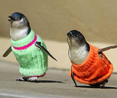 Penguin Jumper Sweater Knitt Aid