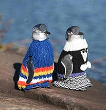 Sweaters For Penguins: The World Responds To An Urgent Call