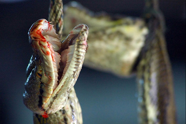 Turning Snakes Into Handbags: The Disturbing Process In 10 Pics
