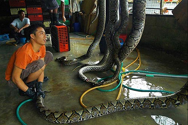 Cruelty To Animals Snakes