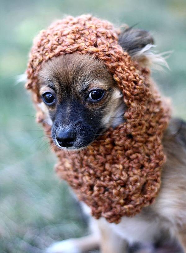 Ewok Dog Hat Etsy