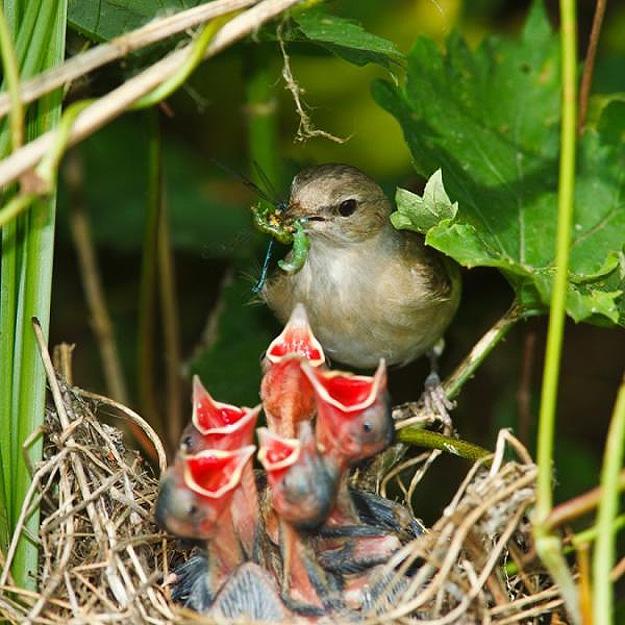 Mama Birds Feeding Baby Birds: 8 Heart Warming Photos