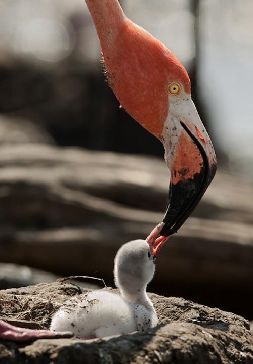 Incredible Bird Nature Photography
