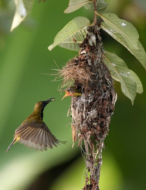 Incredible Nature Bird Photography