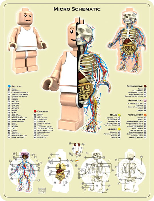 The Anatomy Of A Lego Minifigure