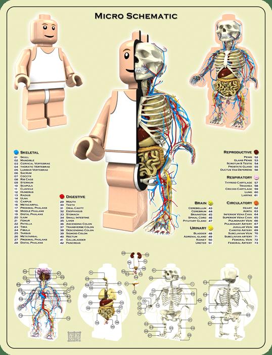 Lego Mini Figure Anatomy Infographic