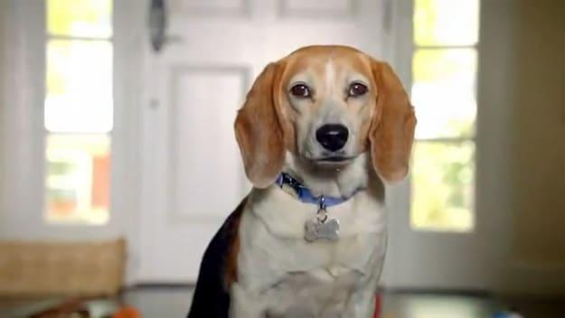 Pet Shelter Project Video Commercials