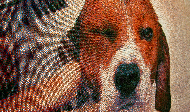 Sprinkle Beagle Dog Portrait Artwork