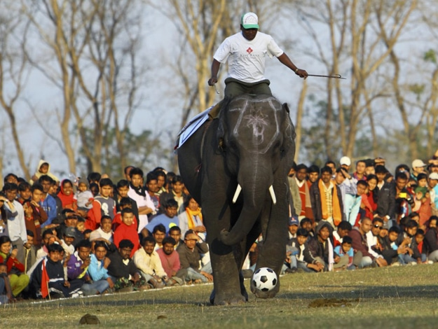 Annual Elephant Festival In Nepal