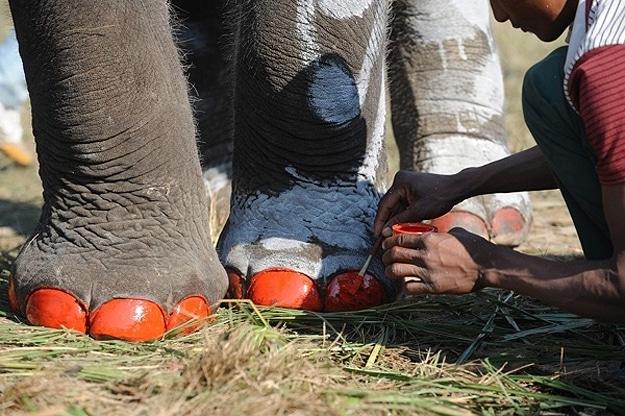 Annual Elephant Festival In Nepal