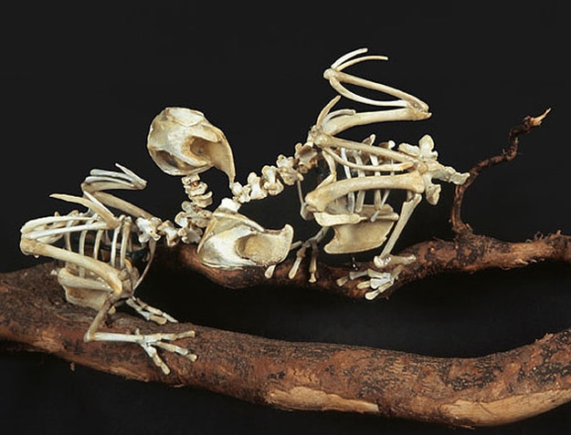 Extinct Bird Sculptures Created From Fast Food Chicken Bones