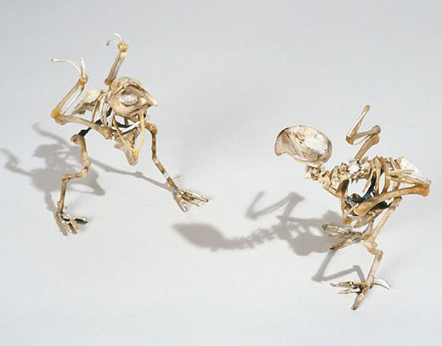 Extinct Birds Made From Bones
