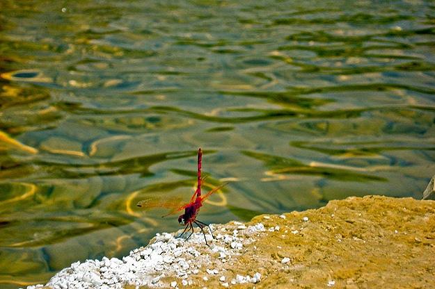 Natural Ocean Salt Sculptures