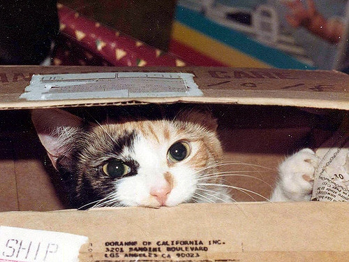 Cats In Storage Bins