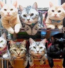 The Best Ways To Organize & Store Your Cats [15 Pics]