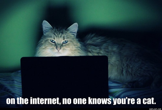 Saturdays are Caturday on Internet